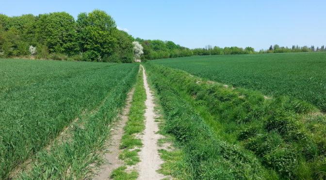 Chwalcie łąki umajone, góry, doliny zielone…..