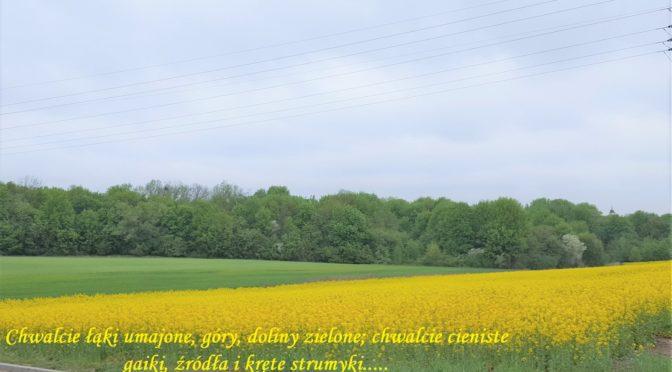 Witaj maj, piękny maj, u Polaków błogi raj ! *)